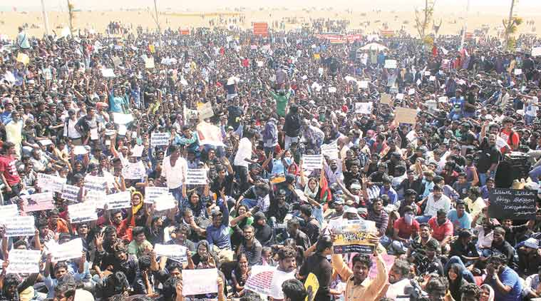 Protestors gathered at Marine Beach in Chennai to demand a lifting on the restrictions on the traditional sport of Jallikattu. Credit: PTI