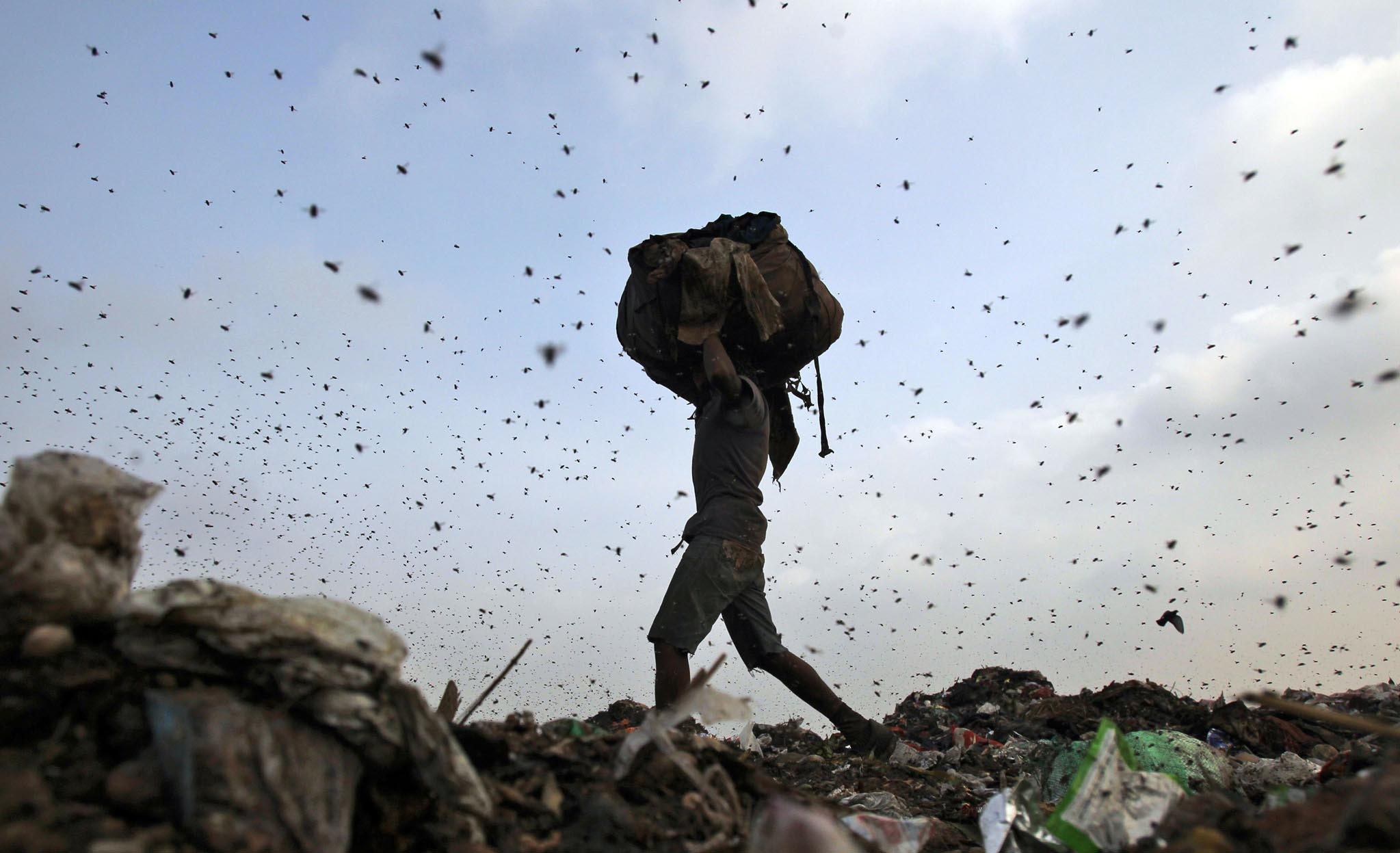 Insects and birds fly in a dump yard as a waste collector collects scraps in New Delhi June 27, 2013. Credit: Reuters/Anindito Mukherjee