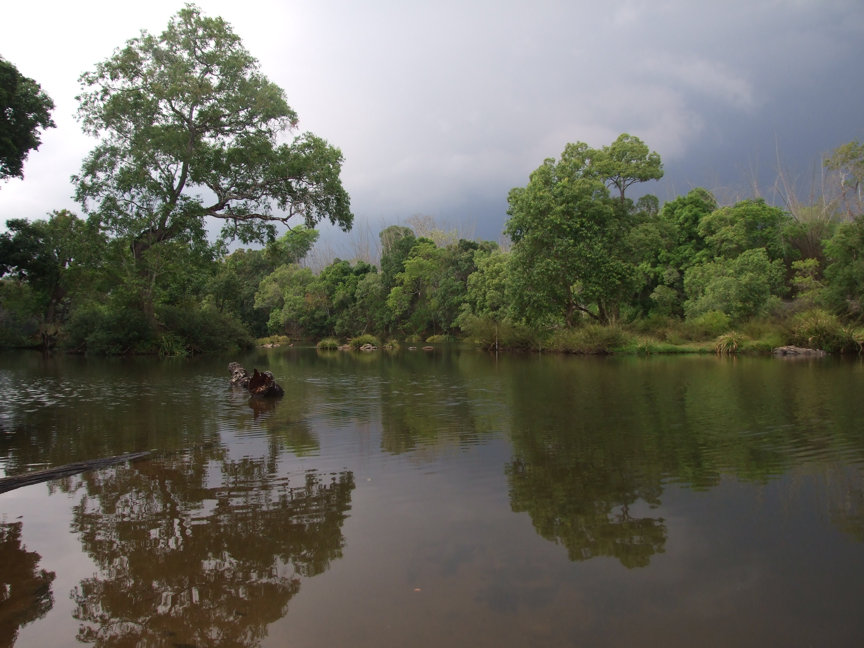 Native riverside trees protect the river just as they protect adjoining farmlands from erosion. Credit: Nisarg Prakash