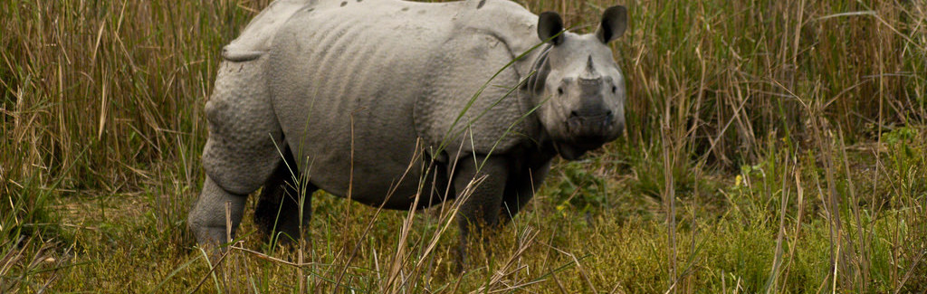 Grasslands of Grey: How the BBC's Flawed Kaziranga Muckraker Has Done Harm