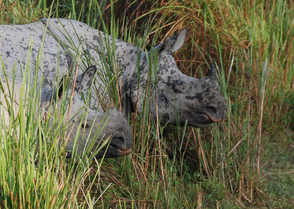 Do Kaziranga's increasing militarised conservation measures necessarily imply a greater security for its wildlife? Credit: shashankgupta/Flickr, CC BY 2.0