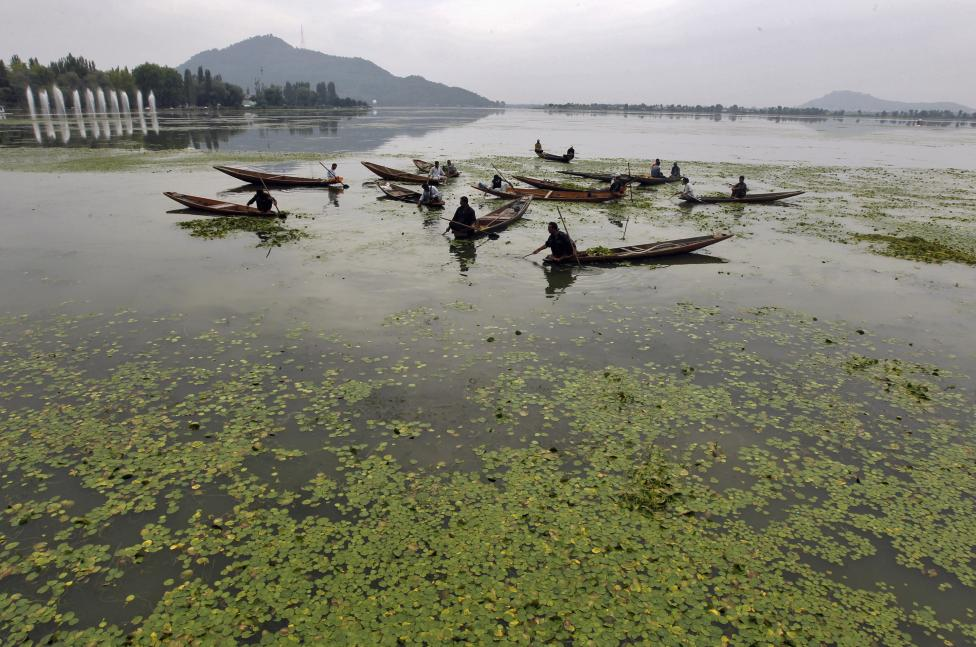 Kashmiri men in boats manually collect weeds from the polluted waters of Dal Lake, covered by aquatic plants in Srinagar September 8, 2012. Credit: Reuters/File photo
