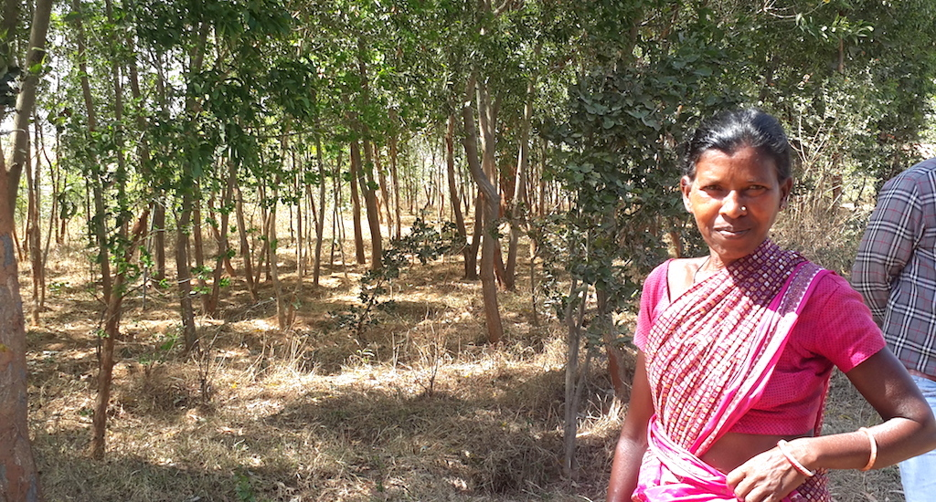 Villager Agni Devi at a papaya garden that is a part of the Hesatu forest. Credit: Chhandosree)