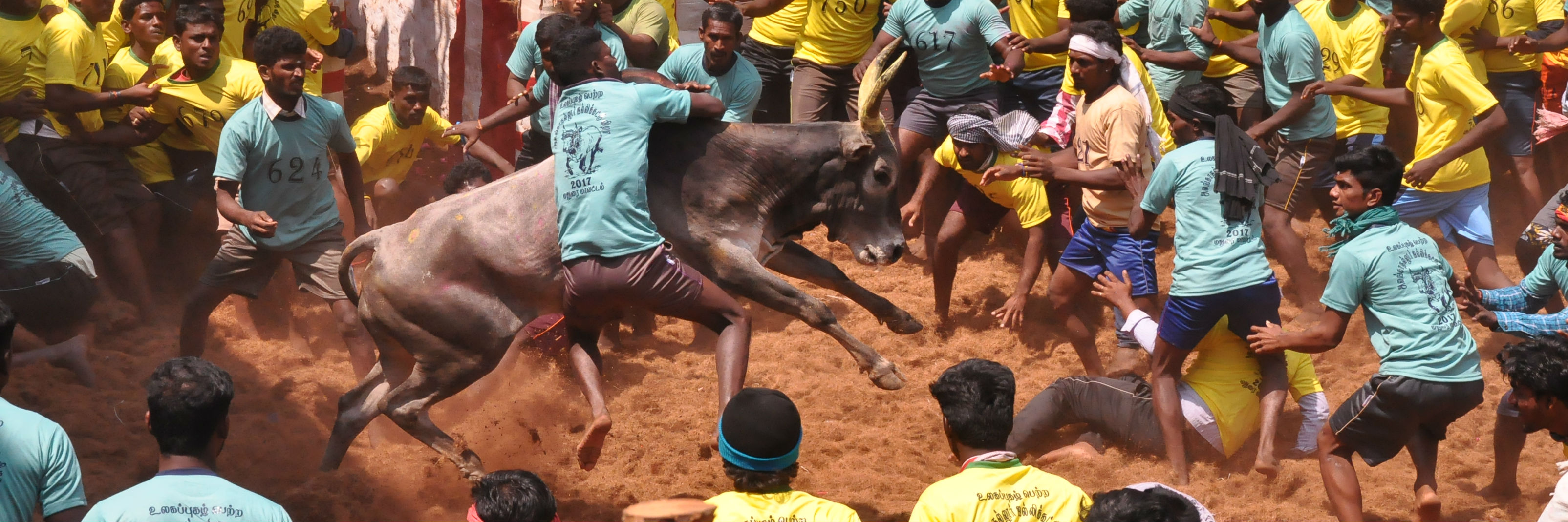 To Tame and Not Be Tamed: Photoessay on Jallikattu