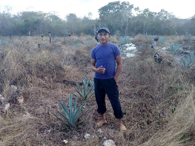 Luis Miguel, a Mayan farmer from Kimbilá, in the southeastern state of Yucatán, Mexico, fears that the installation of a wind farm in his community will damage local crops of corn and vegetables. Credit: IPS
