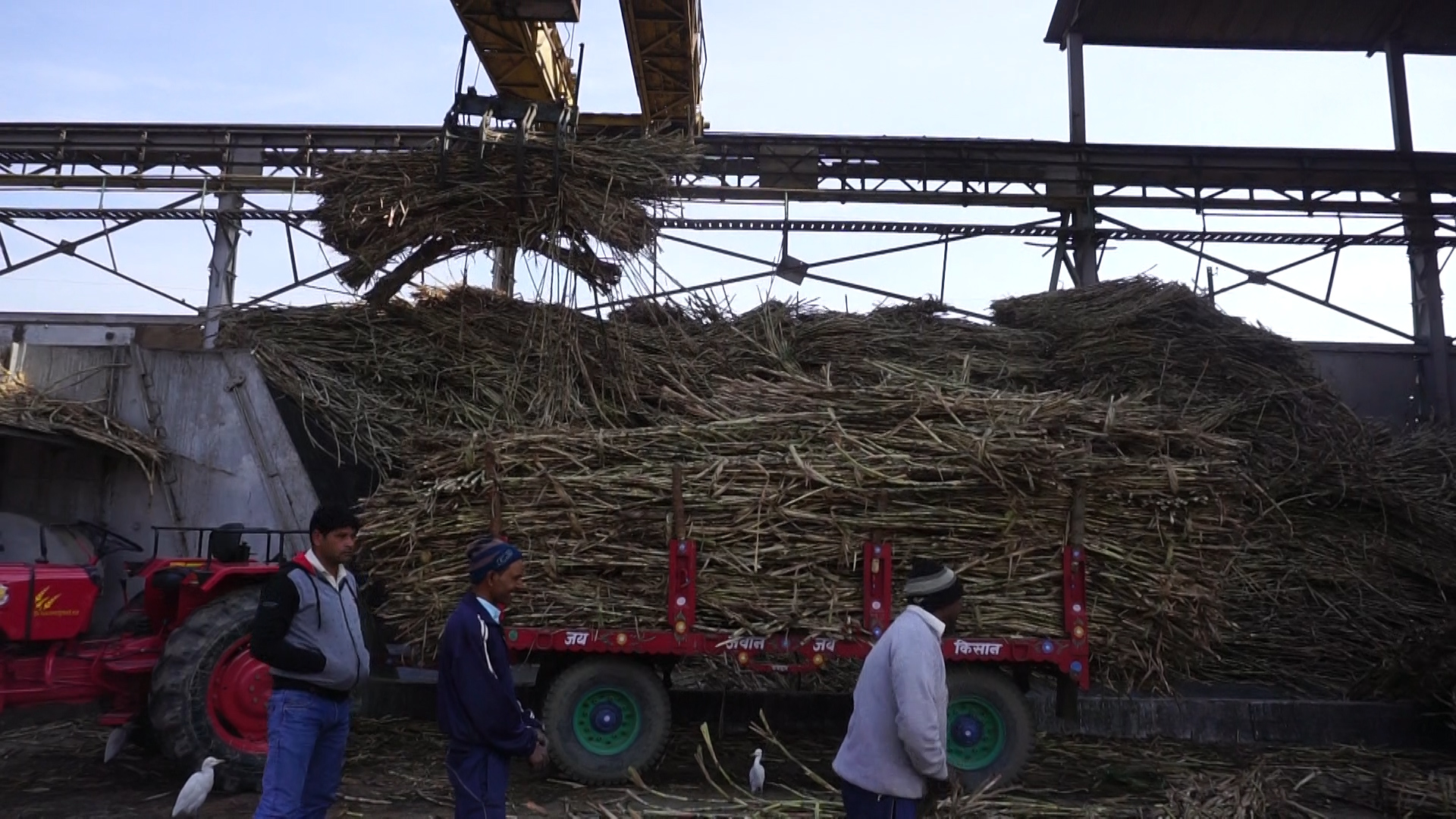 Sugarcane TN