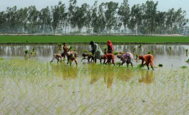 Over 11.2 Lakh PM-KISAN Payment Transfers Failed During COVID-19 Lockdown: RTI