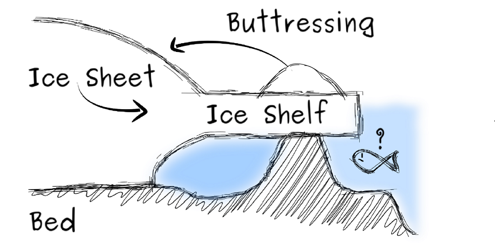 An ice rise stabilises the system by buttressing the ice shelf