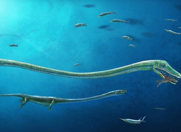 A fish-eating reptile called Dinocephalosaurus, which lived about 245 million years ago during the Triassic Period, is pictured in this artist's reconstruction handout image showing the rough position of the embryo within the mother. Dinghua Yang/Handout via REUTERS