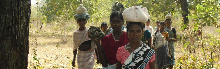 SC Seeks Report on Action Taken Against Tribals Who Lost Claim to Forests