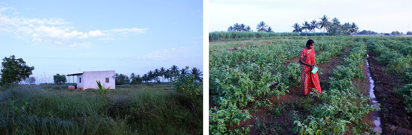 Chandra's new house (left) and the fields behind. Credit: Aparna Karthikeyan