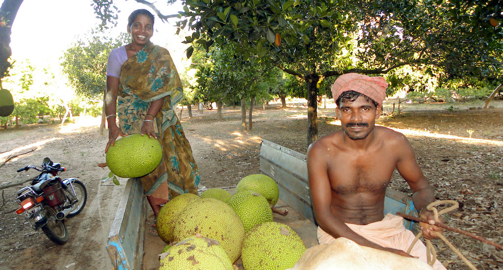 A farmer couple on their way to the market with their jackfruit harvest. Credit: Sri Padre / Adhike Patrike