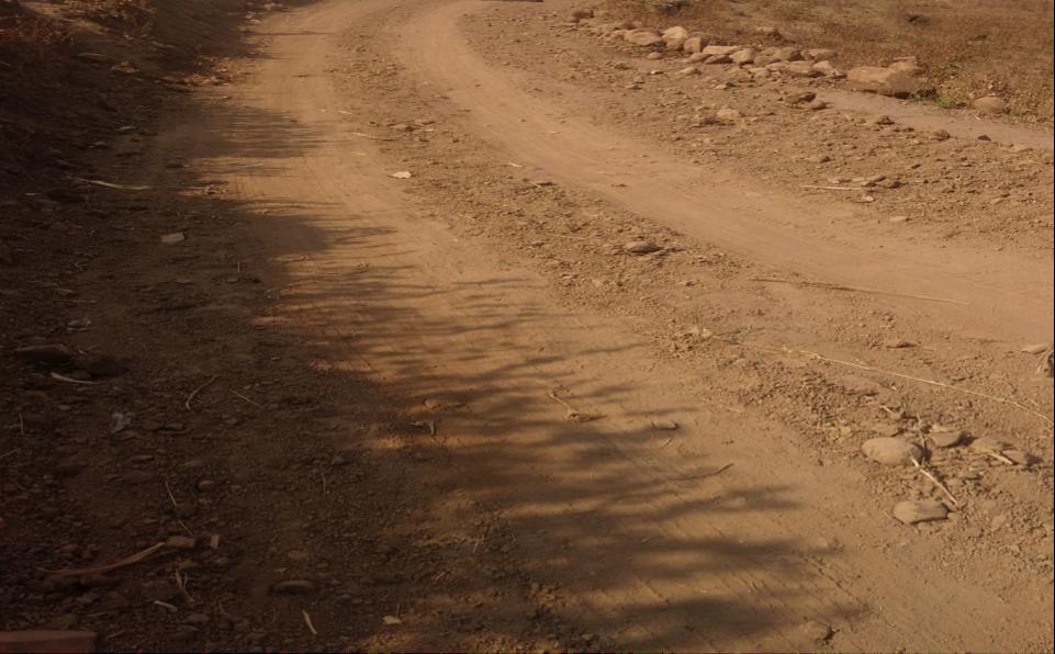 The road from Chhodavani to Moti Kadai. Courtesy: Udayan Rathore