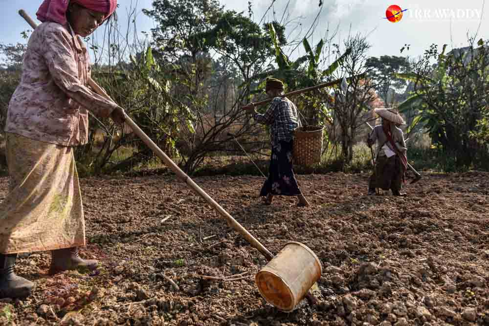 Those at the shelter tend to farmland and rear livestock, but their produce is shunned at local markets due to stigma around the disease. Credit: Pyay Kyaw/The Irrawaddy