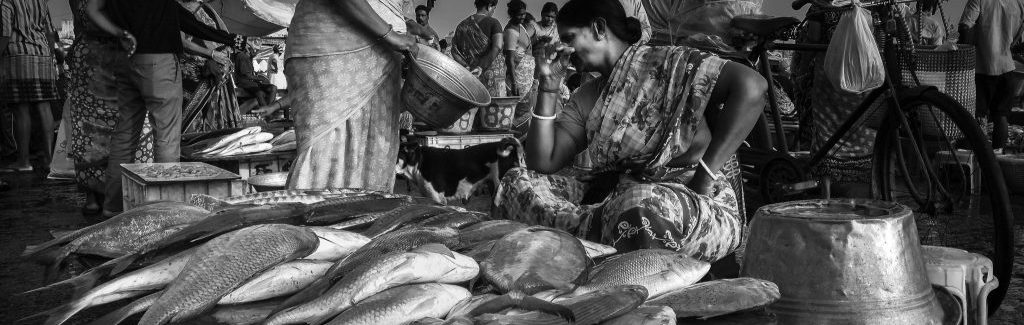 Exploring the World of India's Women Fish Workers
