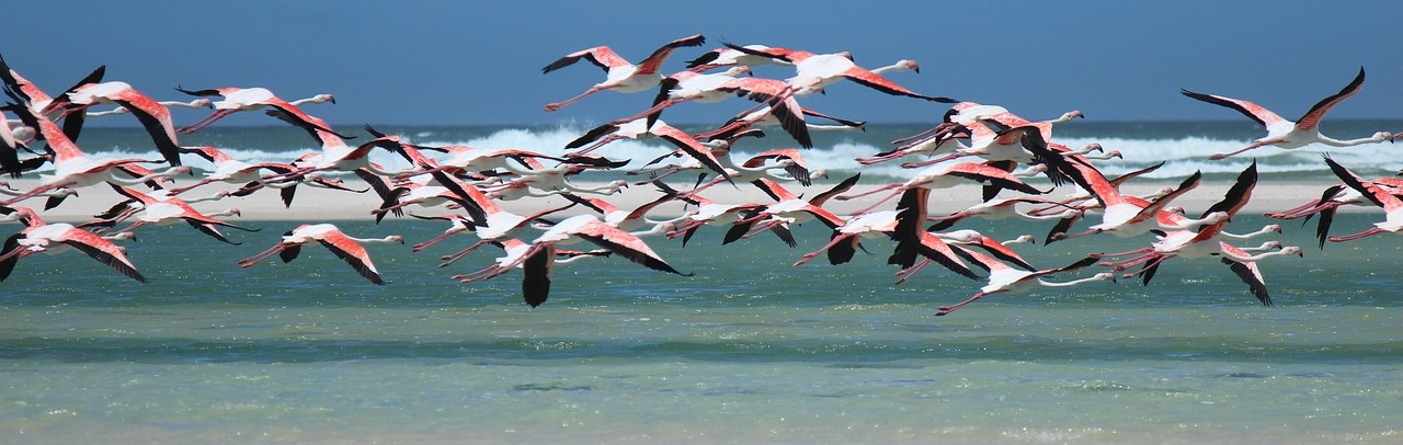 How Much Longer Before India's Flamingo Hub Will Cease to be a Flamingo Graveyard?