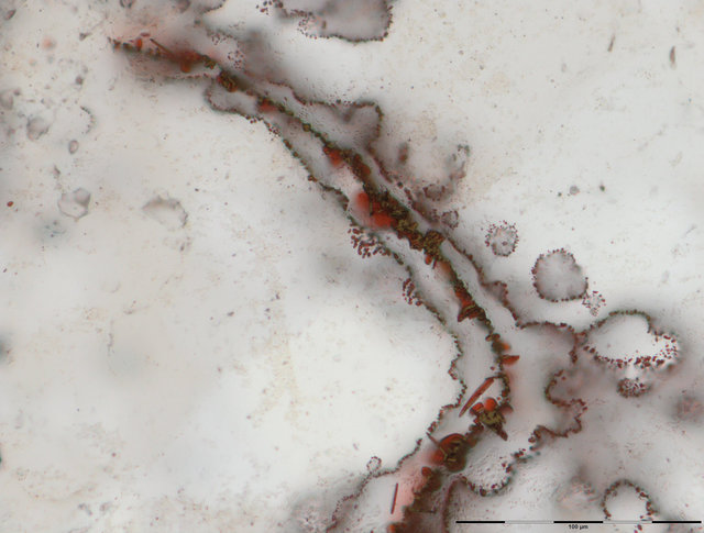 A haematite filament enveloped by a fine irregular layer of nanoscopic haematite from vent deposits in the Nuvvuagittuq Supracrustal Belt in Québec, Canada is pictured in this undated handout photo obtained by Reuters March 1, 2017. These filaments of iron, about half the size of a human hair, were made by primitive microbes involved in the carbon and iron cycles. Credit: Reuters