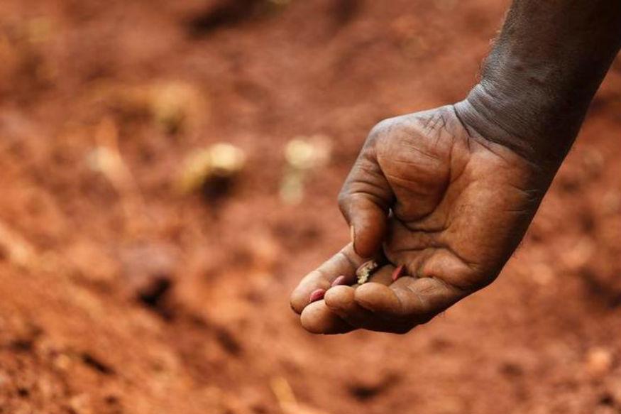 A farmer plants peanuts on a field in Kurnool. Credit: Reuters/Files