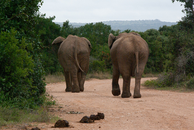 Physics of Poo: Why It Takes You and an Elephant the Same Amount of Time