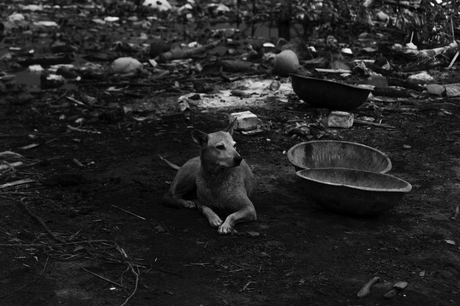 A dog sitting at the ghat amongst the remains of pyres. Credit: Wamika Singh