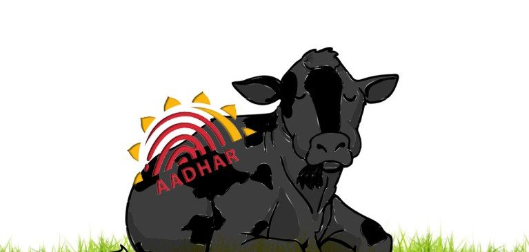 If Modi Government Has Its Way, Even Cows Will Have an Aadhaar Number