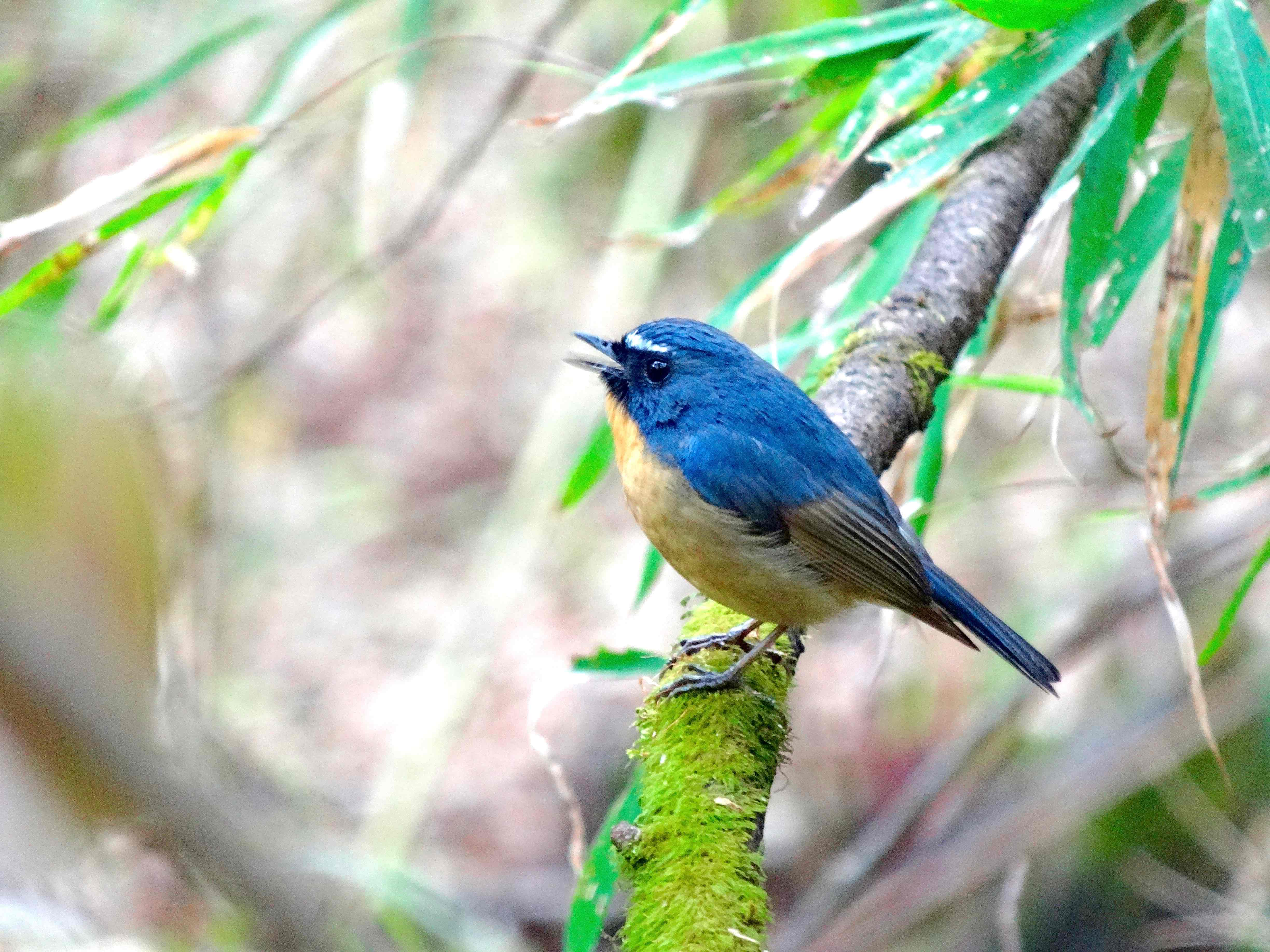 Why Some Himalayan Birds Are Now Climbing Higher to Nest