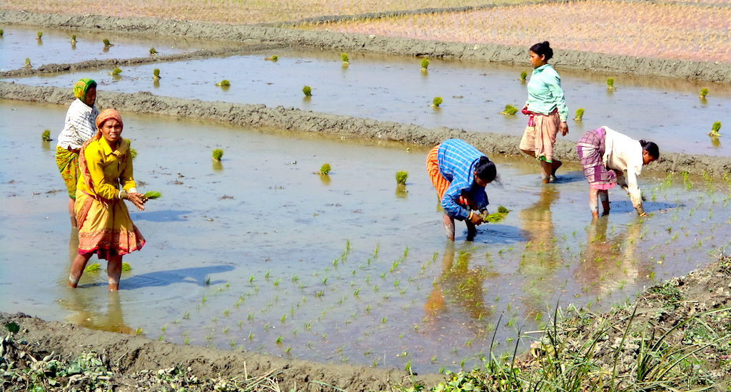 A Smart Village Rises in Bengal Through Agricultural Entrepreneurship