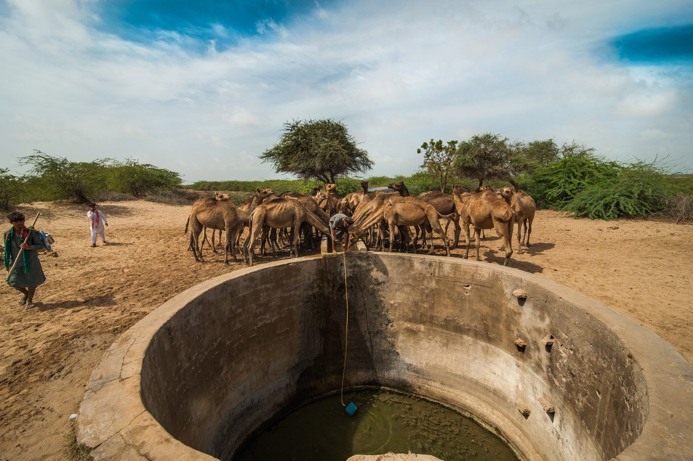Kharai camels drinking water from a well in Mohadi village of Kachchh, close to the India-Pakistan border. Credit: Ritayan Mukherjee/PARI