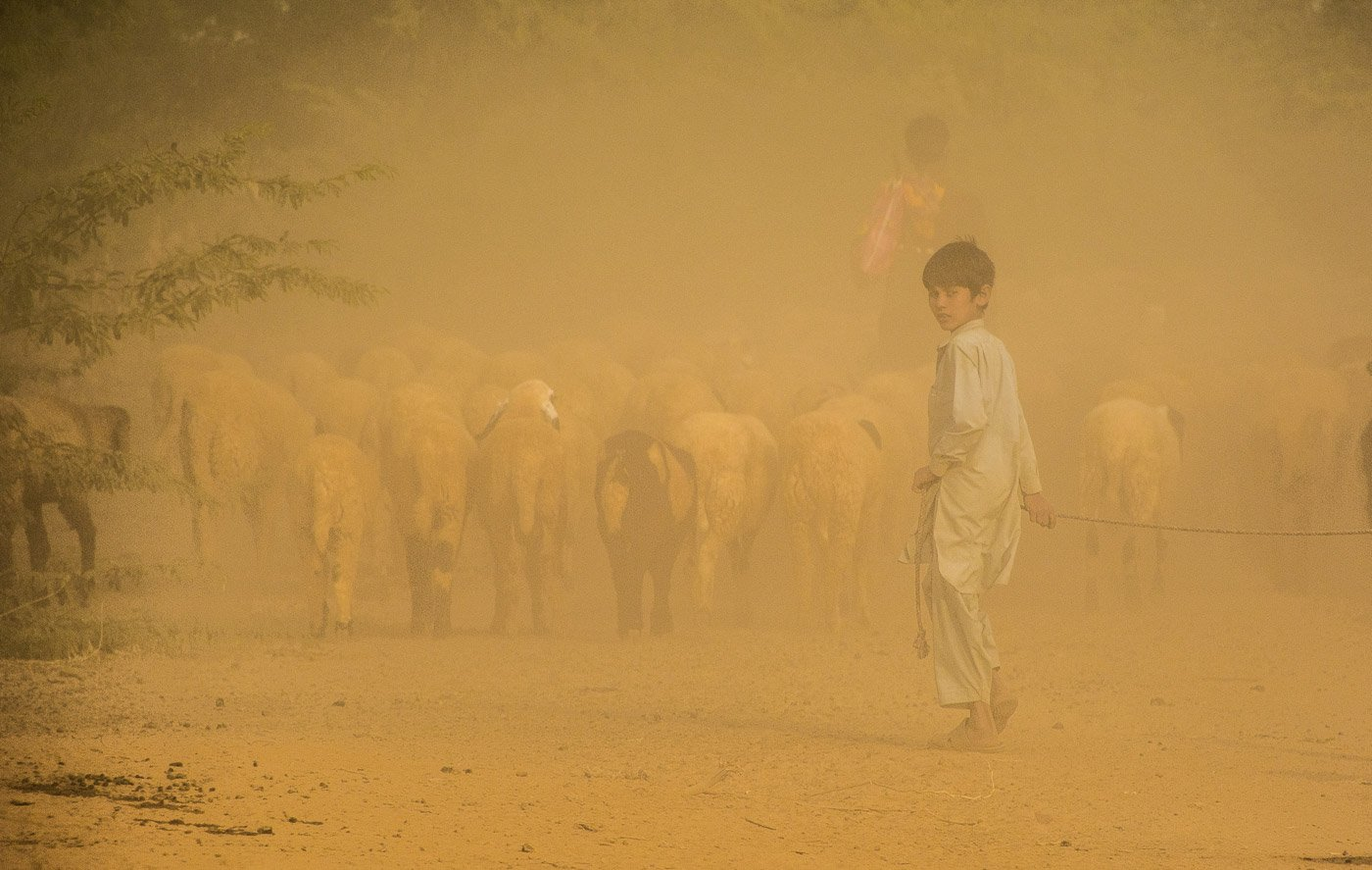 A Fakirani Jat kid moving with his herd while a dust storm gathers in summer. Credit: Ritayan Mukherjee/PARI