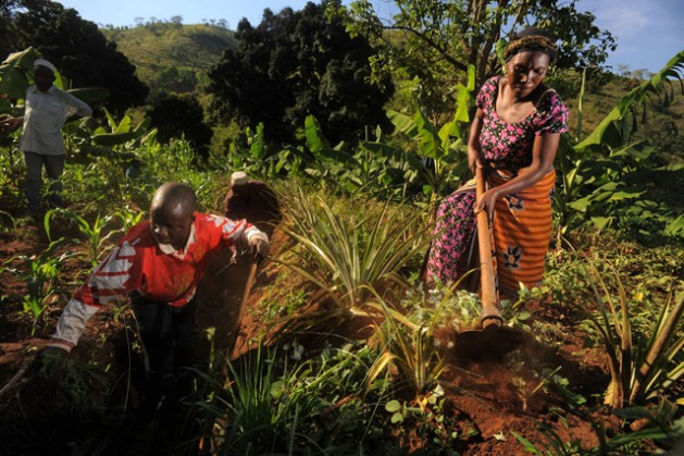 How Agricultural Technology Can Adapt in a Warming World