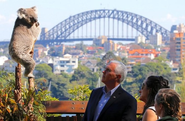 Down Under, Mike Pence Tries Hand at Koala Diplomacy