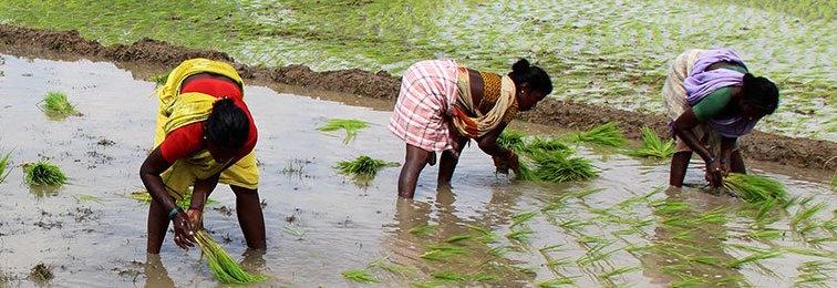 In Nadumudalaikulam, 'Work' Means Women