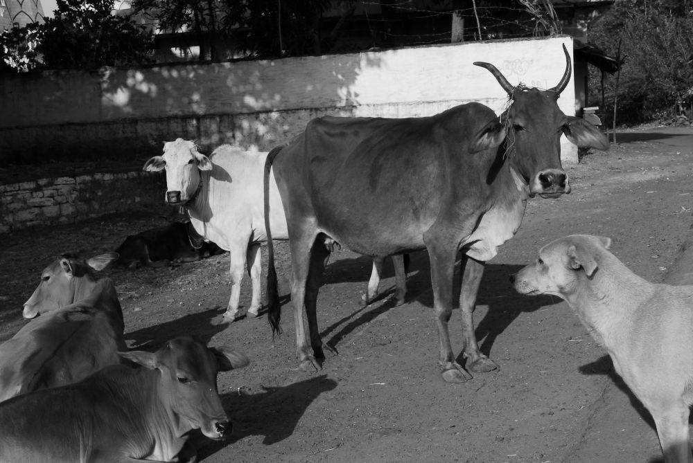 animals treated badly essay