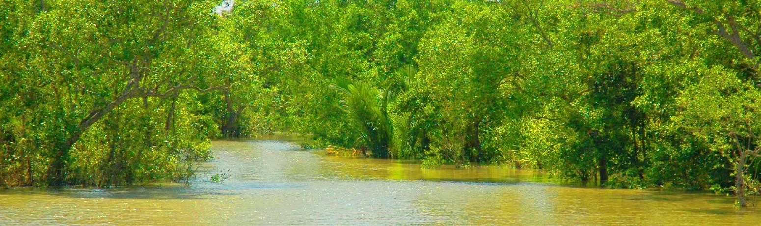 'Maach and Chaash Brought us to Sundarbans'