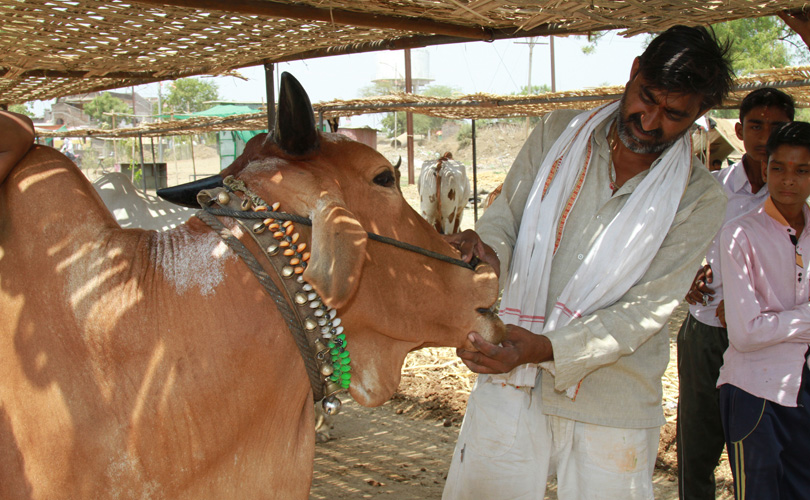Why Adityanath's Drive Against Slaughterhouses is Hasty and Thoughtless