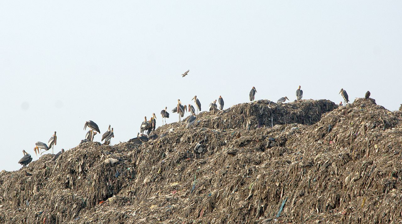 Life in the Garbage Heap