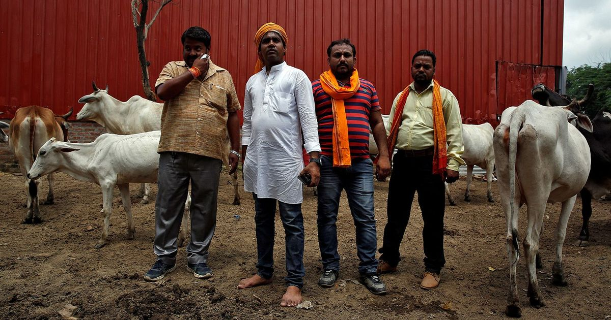 Vigilantes Attack Cattle Transporters in South Delhi, Police Blame 'Animal Rights' Activists