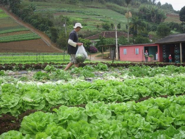 Brazil Drives New School Feeding Model in the Region