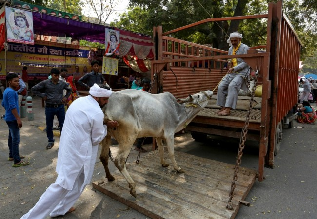 Centre's Ban on Sale of Cattle for Slaughter Stayed by Madras HC