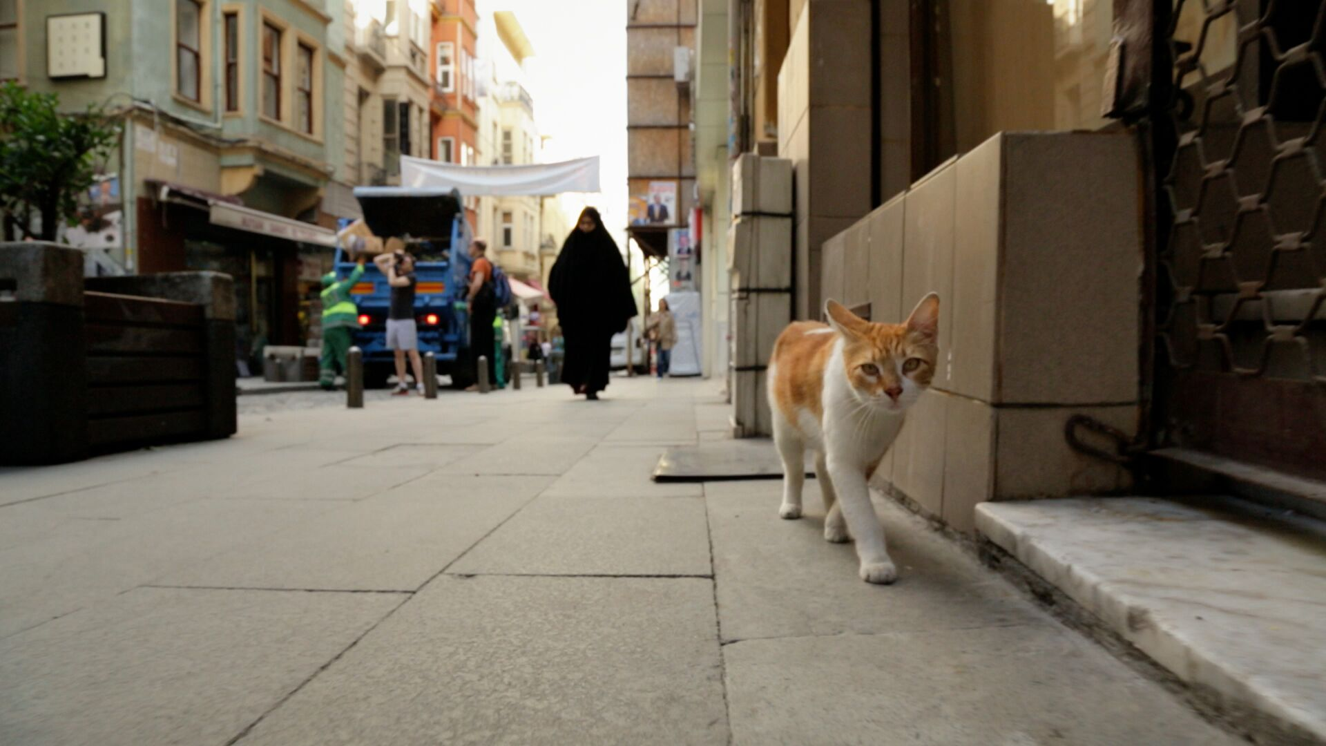 Exploring Istanbul From a Cat's Point of View