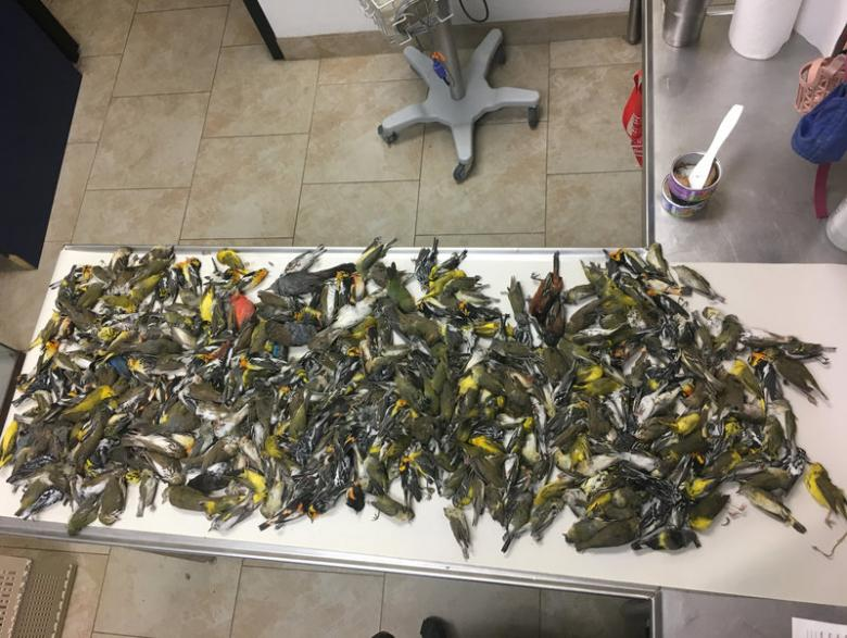 Nearly 400 Migratory Birds Killed After Flying Into Texas Skyscraper