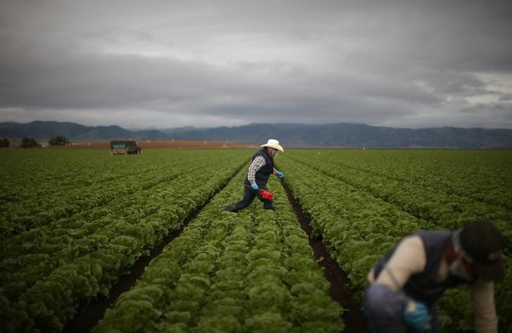 While Trump Talks Tough on Immigration, Mexicans Work the Farm