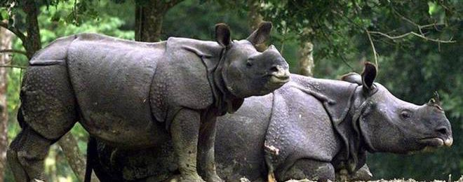 Upon Release, Jailed Activists Allege Being Targeted Over BBC Documentary on Kaziranga Excesses