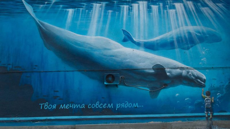 Panic Over Russian Online Suicide Game Sparks 'Whale Hunt' in China