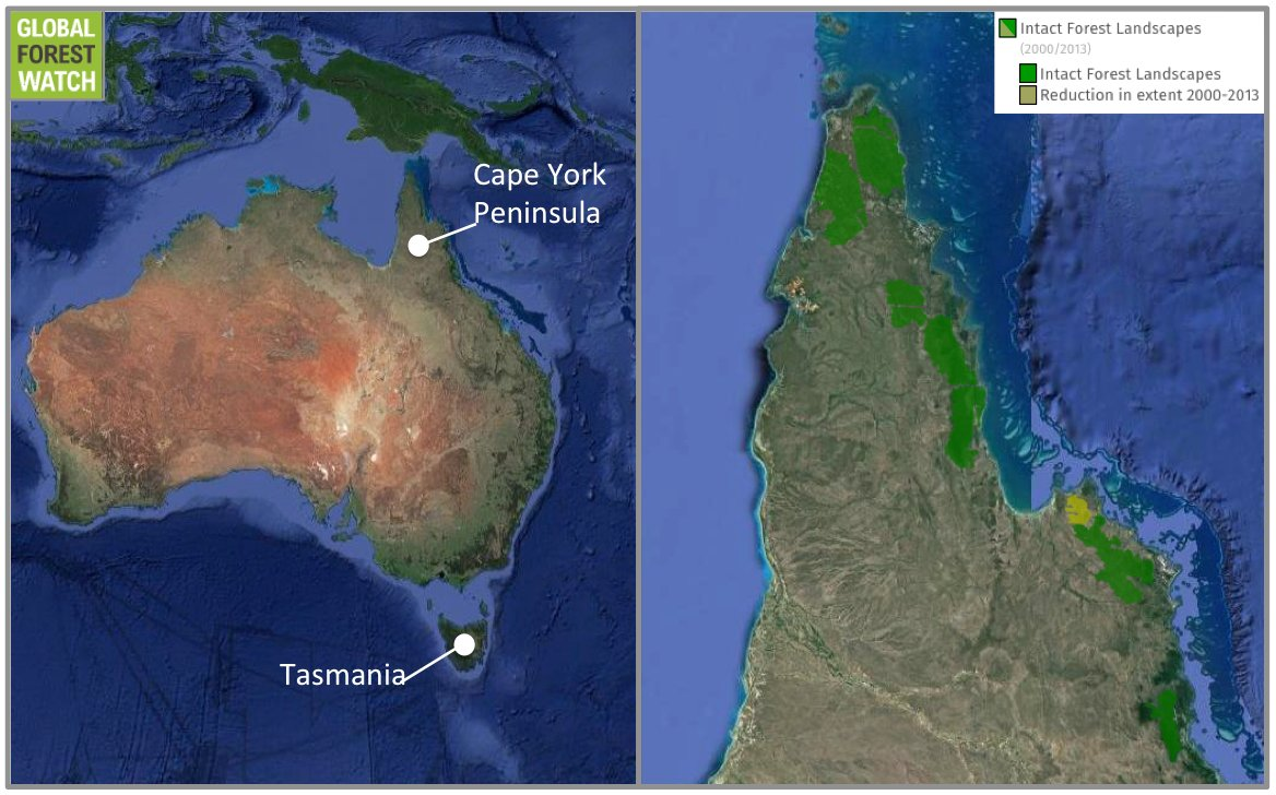 The survey will be taking place in northern Australia's Cape York Peninsula, thousands of miles from the thylacine's last stronghold of Tasmania. Satellite data show the region still boasts significant expanses of intact forest landscape — areas of native vegetation cover that are large and undisturbed enough to retain their original biodiversity levels. Credit: Google Earth