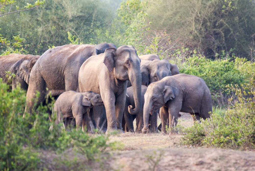 Poorly Maintained High-Power Lines Are Killing Elephants in Odisha
