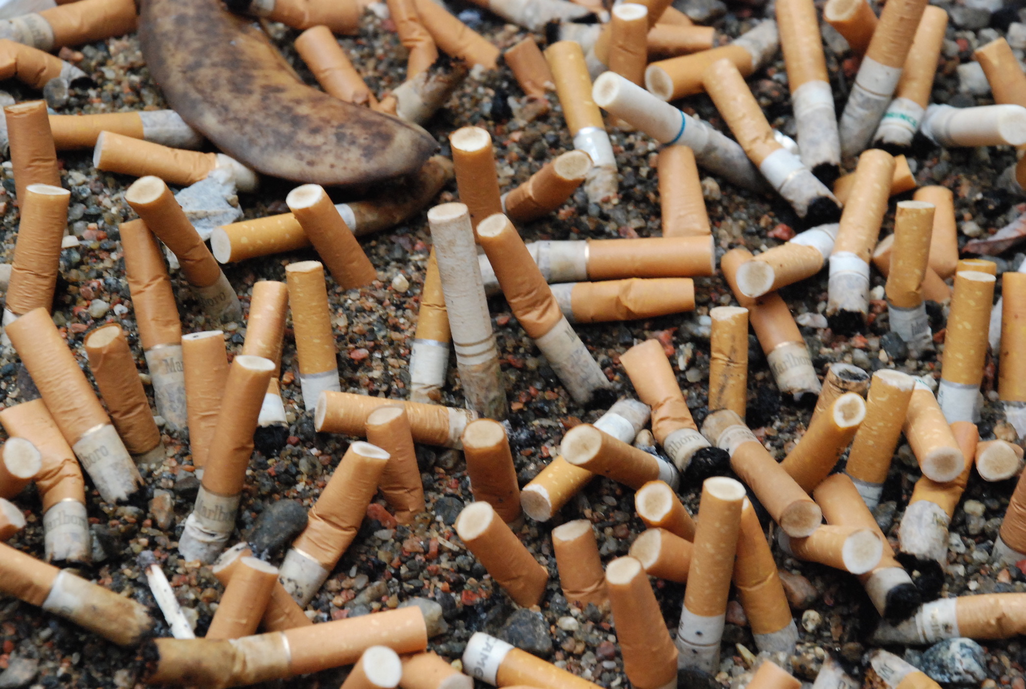 environmental impact of tobacco However, one of the most overlooked issues smoking creates is the damaging impact the use, and subsequent discarding of cigarettes, has on the environment generally, the public is well aware that second-hand smoke is very dangerous.