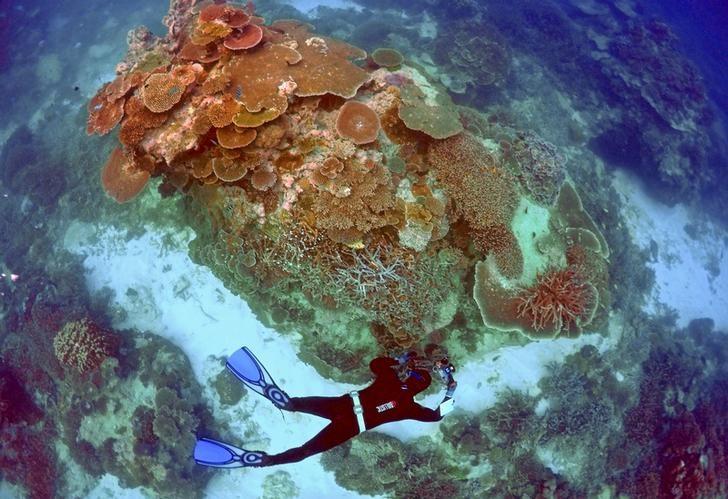 Australia Needs to Do More to Protect Reef, Says UNESCO