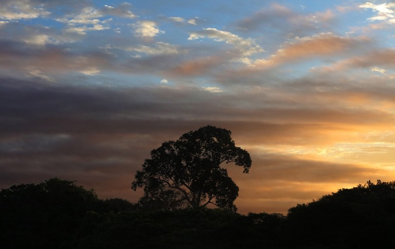 Temer Seeks to Privatise Brazil's Deforestation Remote Sensing Programme