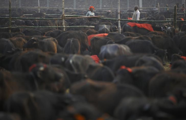 India's Buffalo Meat Exports for April Fall By 11.4%